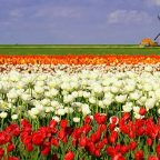 Vacanze in Olanda