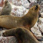 Perà Riserva naturale di Paracas