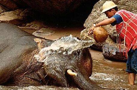 Thailandia - un mahout si prende cura del suo elefante