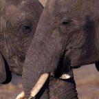 Zimbabwe - FOTO DI ALESSANDRO ZANAZZO dal racconto Zimbabwe, il paradiso dell' Africa