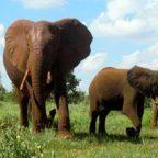 Kenia - FOTO DI Cinzia Pietropoli