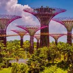 Singapore - i giardini botanici