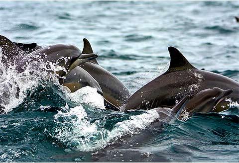 Sri Lanka - Delfini a Kalpitiya - di GIACOMO MORGANTI