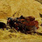 Etiopia - dal Racconto di Fausto Toccaceli, Parco dei Monti Bale
