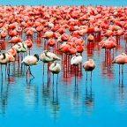 Tanzania - Lago Manyara
