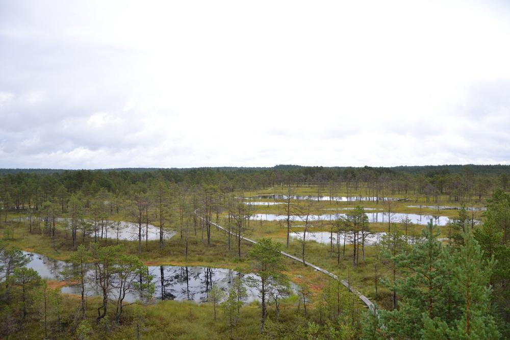 Estonia - Le paludi di Viru Raba