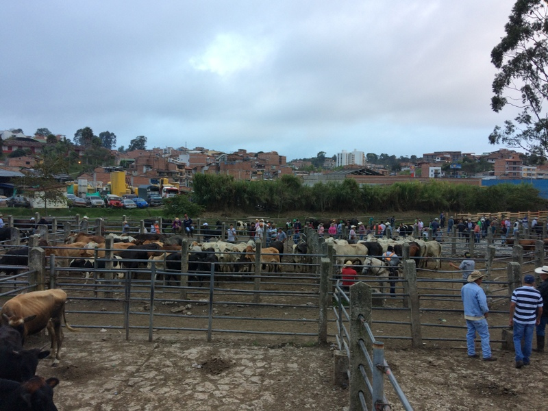 Mercato degli animali a Marinilla