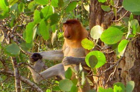 Borneo - FOTO DI SIMONE MARIOTTI