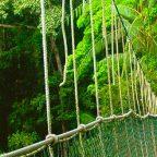Malesia - Taman Negara