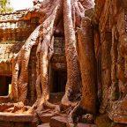 Cambogia - il tempio Ta Prohm di Angkor