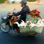 Vietnam - motociclista vietnamita