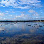 Birdwatching lungo le risaie vercellesi
