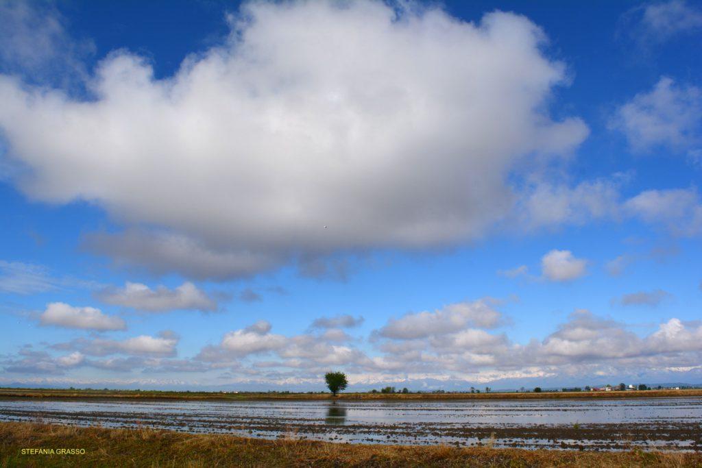 Il mare a quadretti - risaie vercellesi allagate