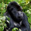 Ruanda - Di soglia in soglia